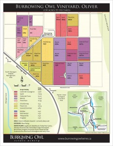 BOV_1763_Vineyard_Map_Oliver_HR